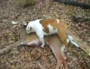 【ニコニコ動画】シカを屍姦する犬を解析してみた