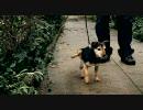 最終兵器犬