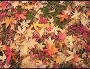 【SDP】Autumn's Wish【Perfume】