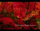 【吹奏楽】 楓葉の舞/長生淳