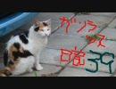 MHP2G ガンランス日記39 vs ナルガクルガ (太刀もあるよ thumbnail