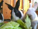 【ニコニコ動画】人参を食べ過ぎてウサギになったお兄ちゃんとヤンデレの妹の食事風景を解析してみた