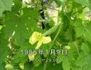 谷山浩子のオールナイトニッポン 1986年01