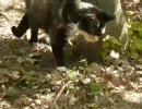 第20位:猫、土の中のモグラを捕まえた thumbnail