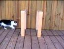 テレポートするネコ