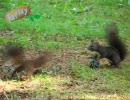 森林公園で野生のエゾリスを見た