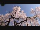 京都の動画集まとめ・その7(画質修正版)