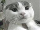 猫取締役「kiki」の1日。