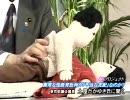 【日教組】小学校で行われている過激性教育