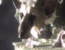 【PV】人喰いの大鷲トリコ TGS_2009 トレーラームービー【PS3】