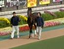 【EX-F1】2009.11.7 トウカイテイオーパドック【東京競馬】