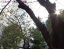 ニコニコ乙女ロード(秋)