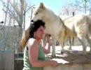 オオカミをもふもふできる施設