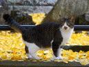 落ち葉と猫-パート1