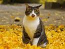 落ち葉と猫-パート2