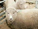 即興で「メリーさんの羊」を弾いてみた