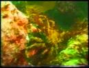 【たけしの】   水族館  【万物○世紀】2/2 thumbnail