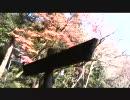 生きてるうちが花なのよ「箕面紅葉狩り」003