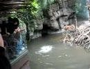 サルがカワウソに襲われた、動物園にて。