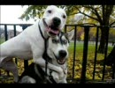 面白い・カワイイ犬画像寄せ集め