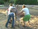 【ニコニコ動画】ロバの去勢を解析してみた