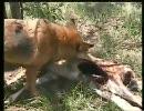 わんこがバンビを食べてるよ