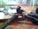 マトリックスなレッサーパンダ