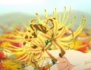 【東方ニコカラ】黄色の曼珠沙華【PV版】