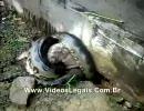 猫さんがヘビに絞め殺されてしもうた thumbnail