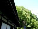 【全部KAITO】多田武彦 男声合唱組曲『中勘助の詩から』より 「追羽根」