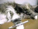 「顔を洗う夢」を見ているぽい猫
