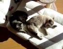 家猫日和 詰め合わせ6