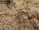 【ニコニコ動画】【グロ】死んだ牛に大量に発生したウジ虫を解析してみた
