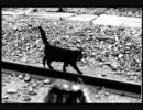 【ニコニコ合宿所】*集中組*/MENTAL DETOX【作業用BGM】 thumbnail