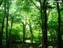 自然音 森のささやき