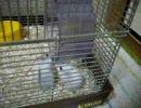 ウチのネズミ共2