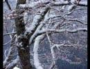 【冬】 α波 1/fのゆらぎ~冬からの 1/3