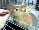 【ウサギ動画】おやつの時間、初めての鏡