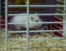 ウチのネズミ共5