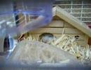 ウチのネズミ共6