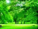 自然音 森のささやき(音量大きいver)