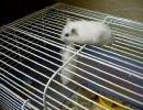 ウチのネズミ共7