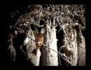カワセミの捕食2 - 240fps