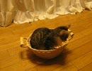 かごに入る猫 thumbnail