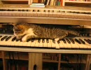 シンセのすきまを探検する猫 thumbnail