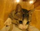 【ニコニコ動画】飼い主にしがみつく猫を解析してみた