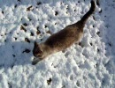 家猫日和 雪