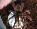 【ニコニコ動画】クモさんの牙がハムスターの目にガッツリと・・を解析してみた