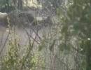 【ニコニコ動画】人間を犯す野生動物達を解析してみた