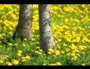 【東方】墨染の桜を明るく弾いてみた。【クラシックギター】